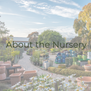 about-the-nursery