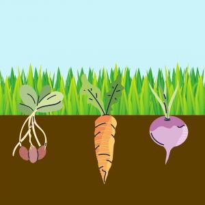 veggie-starts